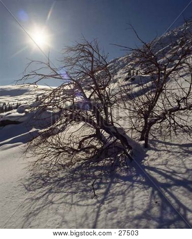 Sunshine Through Tree
