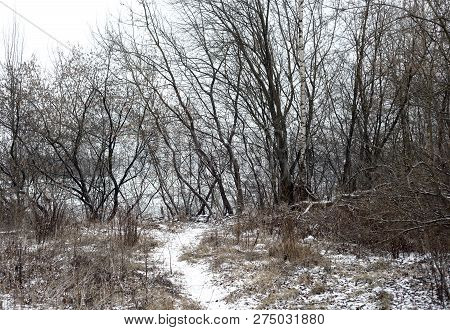 Winter Landscape With Trees At Cloud Day, Russia.