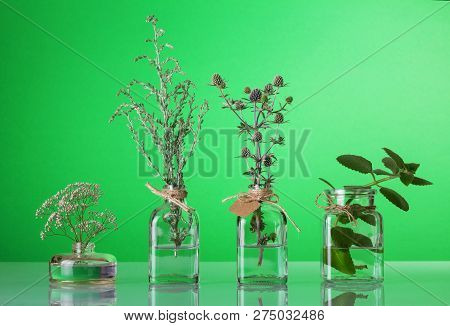 Medicinal Herb In Different Glass Jars On A Bright Green Background