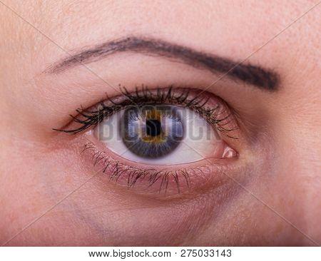 Closeup Macro Portrait Of Female Face. Human Woman Eye With Day Beauty Makeup And Long Natural Eyela