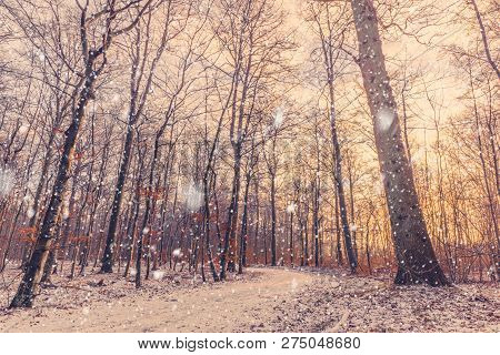 Morning Snow Falling In A Forest With A Beautiful Sunrise That Lights Up The Nature