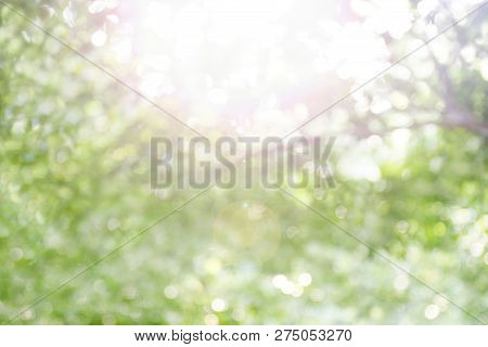 Blurred Bokeh Tree Forest Bright Under Light Shine Flare Of Sun For Nature Background Wild, Bokeh Tr