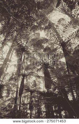 Giant Sequoia And Ferns In Whakarewarewa Redwood Forest, Rotorua, New Zealand