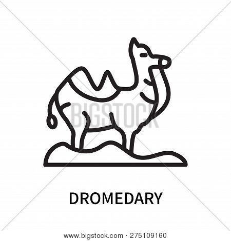 Dromedary Icon Isolated On White Background. Dromedary Icon Simple Sign. Dromedary Icon Trendy And M