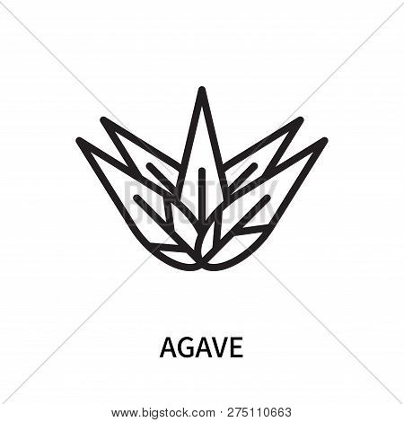 Agave Icon Isolated On White Background. Agave Icon Simple Sign. Agave Icon Trendy And Modern Symbol