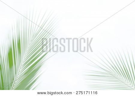 Blurred Soft Of Leaves Coconut Palm Tree Green Nature Beautiful On White Background Coconut, Blur Le