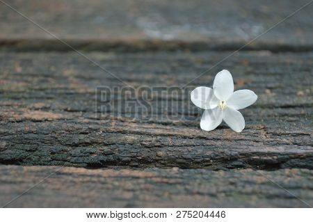 Water Jasmine, Wrightia Religiosa, On Wooden Background