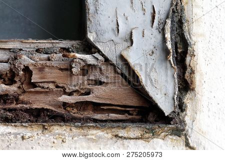 Termite Nest At Wooden Wall, Nest Termite At Wood Decay Window Sill Architrave, Background Of Nest T