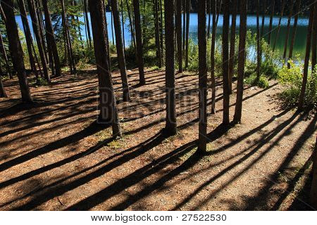 Forest Path And Lake