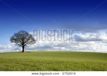 Single Tree In A Field