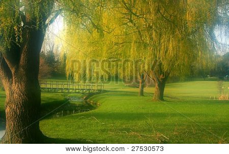 Willow trees by the river in Michigan park
