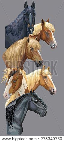 Vertical Postcard With Portraits Of Horses Breeds (russian Heavy Draft Horse; Byelorussian Harness H