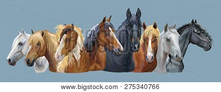 Set Of Colorful Vector Portraits Of Different Horses Breeds (russian Heavy Draft Horse; Byelorussian