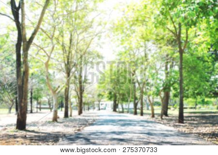 Blurred Tree And Pathway Road In Garden Park, Tree Forest Soft Green Bokeh And Pathway Under Light S