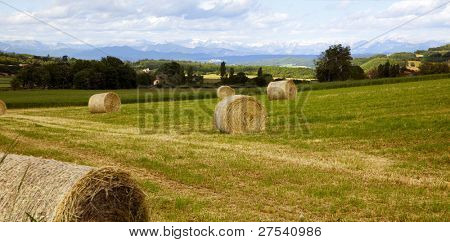 panoramic view of field with haybails in the provence, alps in background