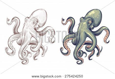 Octopus. Seafood Sea Animal Squid With Tentacles Cartoon And Hand Drawn Style. Octopuses Vector Set