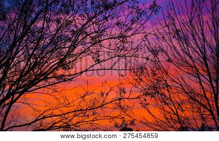 red sky and branches during bright winter morning