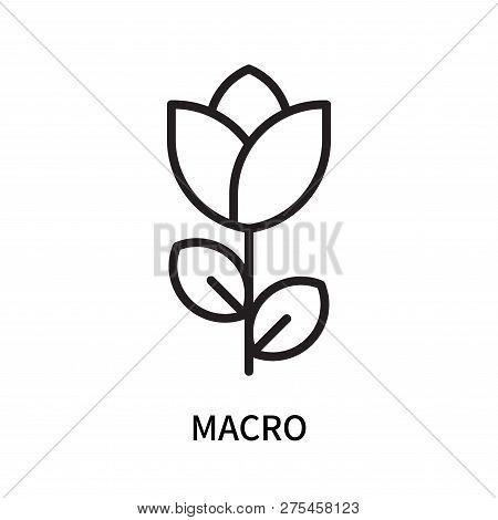 Macro Icon Isolated On White Background. Macro Icon Simple Sign. Macro Icon Trendy And Modern Symbol