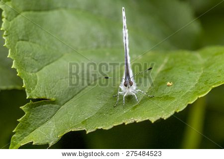 Butterfly Sitting Ona Green Leaf And Waithing For Food