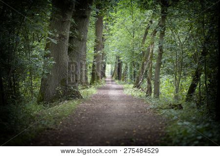 Spring Forest - Path And Trees With Light-green Leaves.
