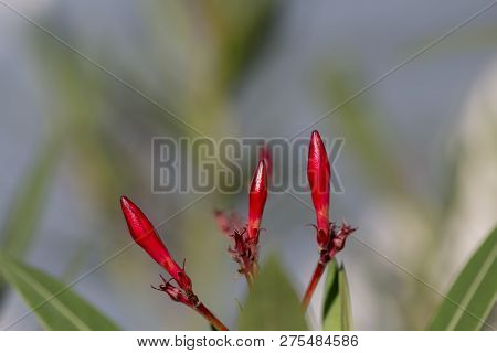 Colorful Flowers With Green On Background And Blurr