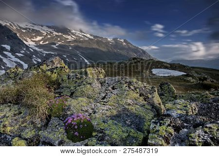 The Kamchatka Rhododendron (rhododendron Camtschaticum). Spring Flowers Of Kamchatka. Flowers And La