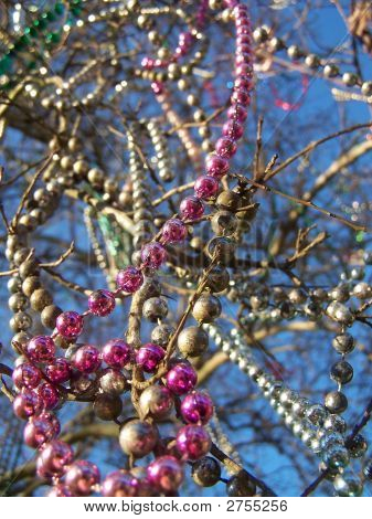 Mardi Gras Beads Hanging From Tree