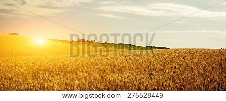 Wheat Cultivated Crop Field Sunset Landscape Harvest