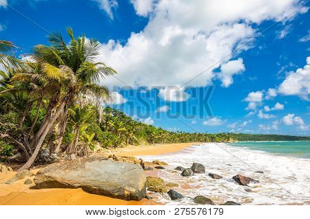 Exotic Carribean Shore Of Puerto Rico Flamenco Beach