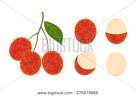 Fresh Rambutan Fruit Vector Isolated Set On White Background - Vector Illustration