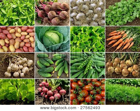 organic vegetables and greens