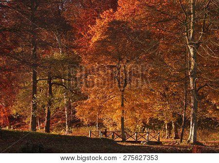 Hørsholm Slotshave In Autumn