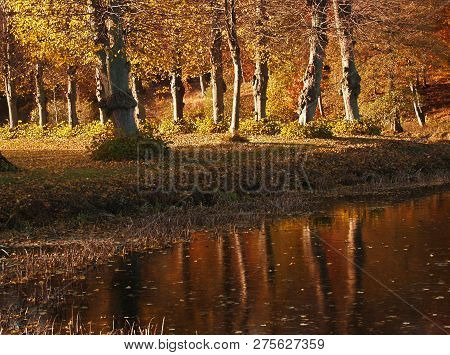 Reflection On A Lake In Autumn In Denmark