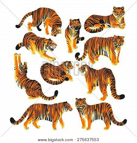 Graphic Collection Of Tigers In Different Poses.