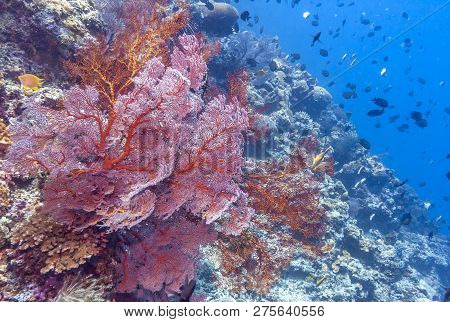 Coral Garden Off The Coast Underwater Bali Along Sloping Wall