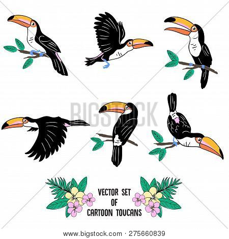 Vector Set Of Cartoon Toucans Sitting On Brench, Flying, With Lettering And Tropical Flowers, Illust
