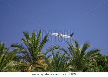Airplane Over Palm Trees