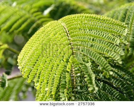 Close-Up Leaf With Fine Details
