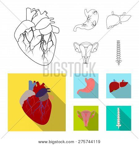 Vector Illustration Of Body And Human Sign. Set Of Body And Medical Stock Symbol For Web.