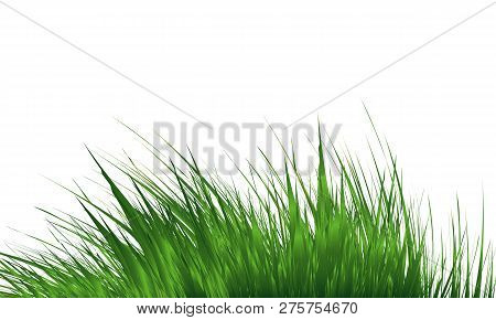 Grass Border , Abstract Green Grass . Simple Meadow Grass, Wild Lawn. Vector Illustration