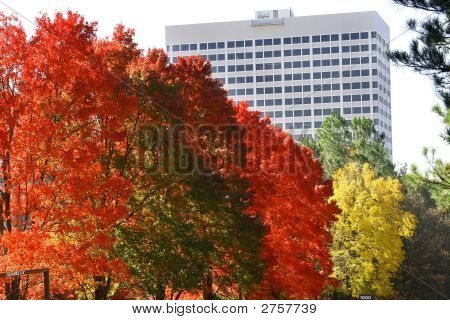 Autumn In Georgia