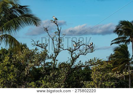 Ibises perching on tree tops in a Florida wetland lagoon against a blue cloudy sky.