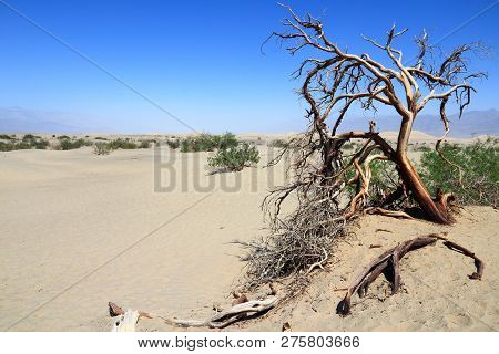 Death Valley National Park. Mojave Desert In California, Usa. Inyo County - Sandy Desert With Dead T