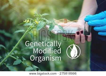 Woman Scientist Genetic Engineer Testing The Plant For The Presence Of Genetic Modification. Organis