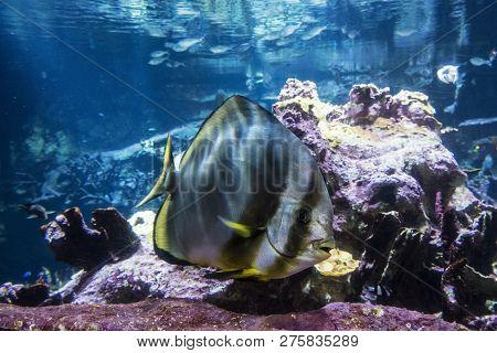 Cherbourg-octeville, France - August 26, 2018: Aquarium Inhabitants In The Maritime Museum La Cite D