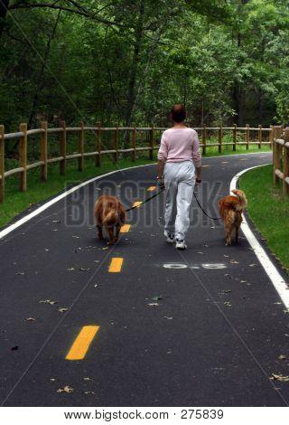 Woman Walking Dogs 001