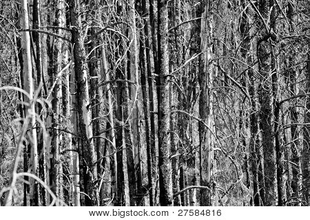 Dense Forest Area