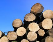 stacked logs of wood. poster