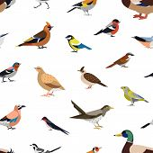 Seamless pattern with wild forest birds on white background. Backdrop with avians. Ornithological vector illustration in modern geometric flat style for wrapping paper, fabric print, wallpaper. poster