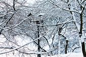 Winter. Christmas and New Year. Bitches of snowy trees intertwine. Winter landscape poster